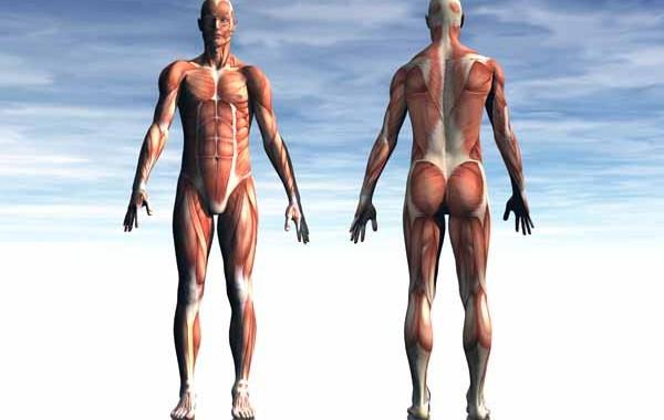 muscle health